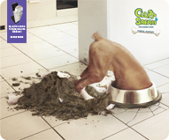 SVStudios Reklam Jansı Ödül